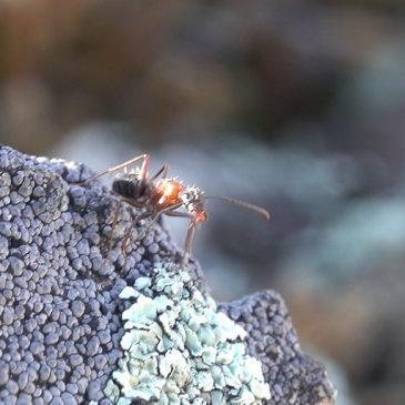 Ant-i matters