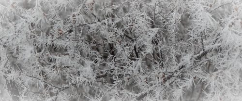 Hoar frosting